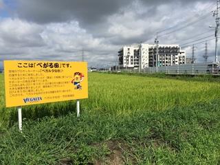 べがる田全景 20150815.jpg